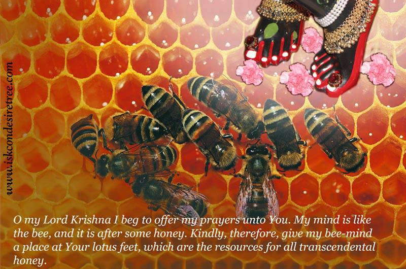 Quotes by Srila Prabhupada on A Prayer to Krishna