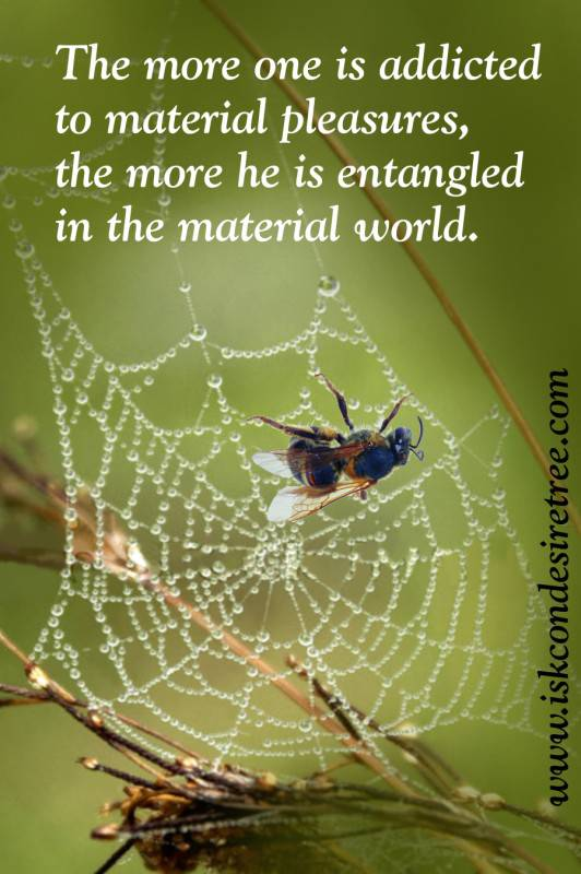 Quotes by Srila Prabhupada on Becoming Entangled in The Material World