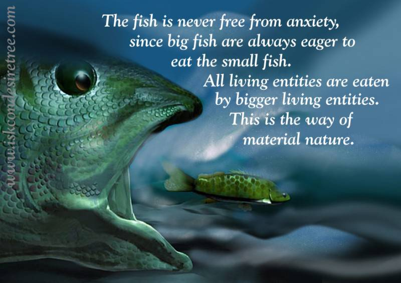 Quotes by Srila Prabhupada on The Way of Material Nature