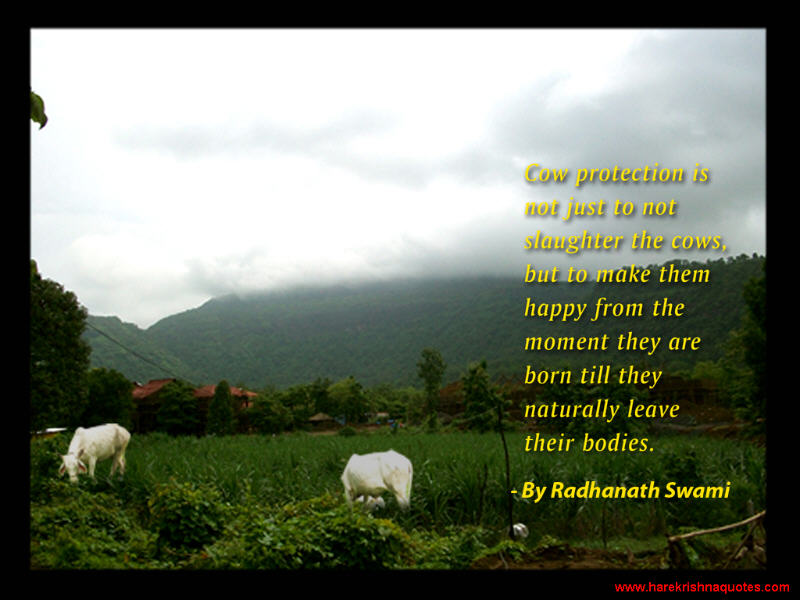 Radhanath Swami on Cow Protection