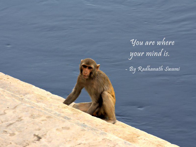 Radhanath Swami on Mind