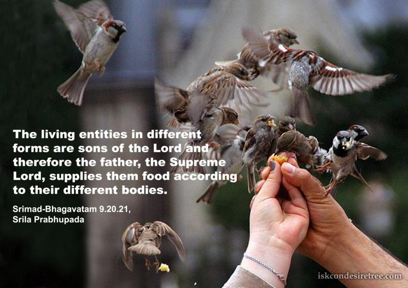 Srila Prabhupada on Supply of Food To Living Entities