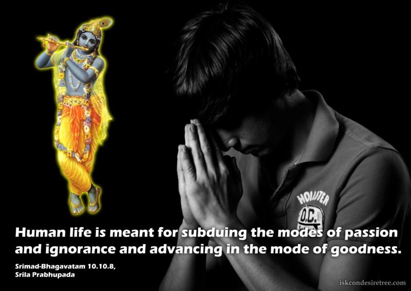 Srila Prabhupada on Human Life