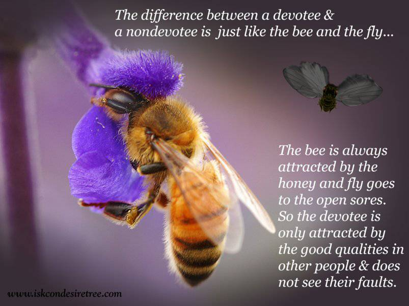Quotes by Srila Prabhupada on Difference Between A Devotee and A Non Devotee