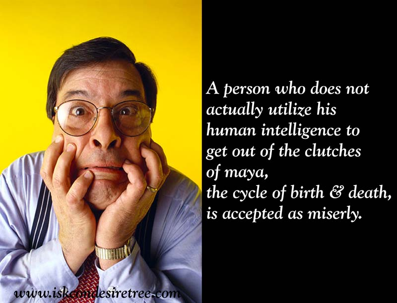 Quotes by Srila Prabhupada on Miserly Person