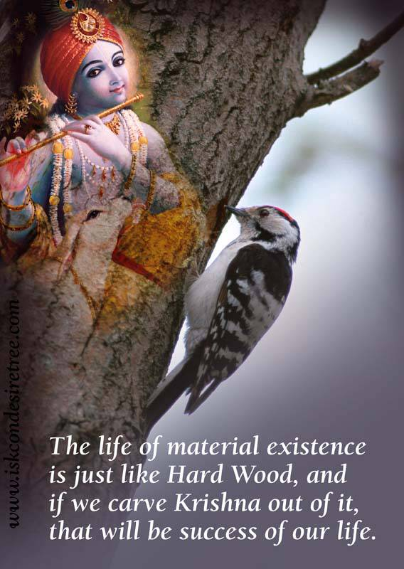 Quotes by Srila Prabhupada on Success of Our Material Existence