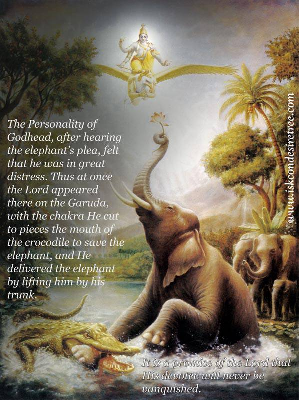 Elephant Quotes | Quotes By Srila Prabhupada On The Lord Delivering The Elephant