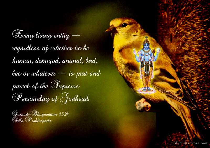 Srila Prabhupada on Every Living Entity